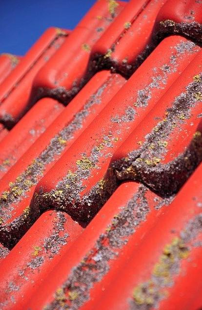 algae roof shingles